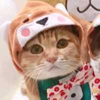 超萌的猫咪汪星人爱人头像