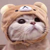 乖巧超萌的小猫cp头像