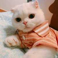 乖巧的小猫恋人头像